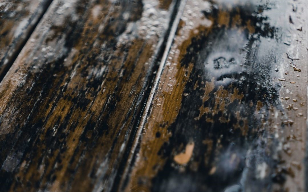 How to Remove Humidity from Your Furniture and Textiles for Proper Moisture Control